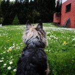 Beny_Popovice_14